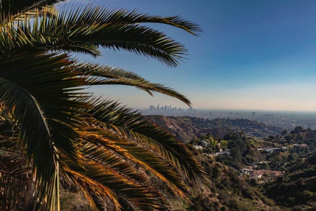 the city of Los Angeles seen through a palm tree